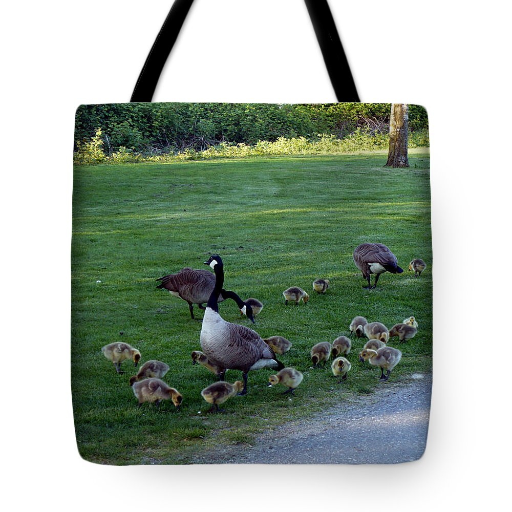 Canada Geese Tote Bag featuring the photograph Gosling Daycare by Nicki Bennett