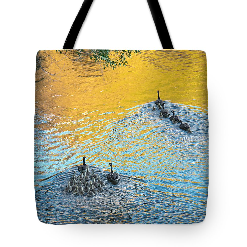 Geese Tote Bag featuring the photograph Goslings Morning Swim by Robert Bales