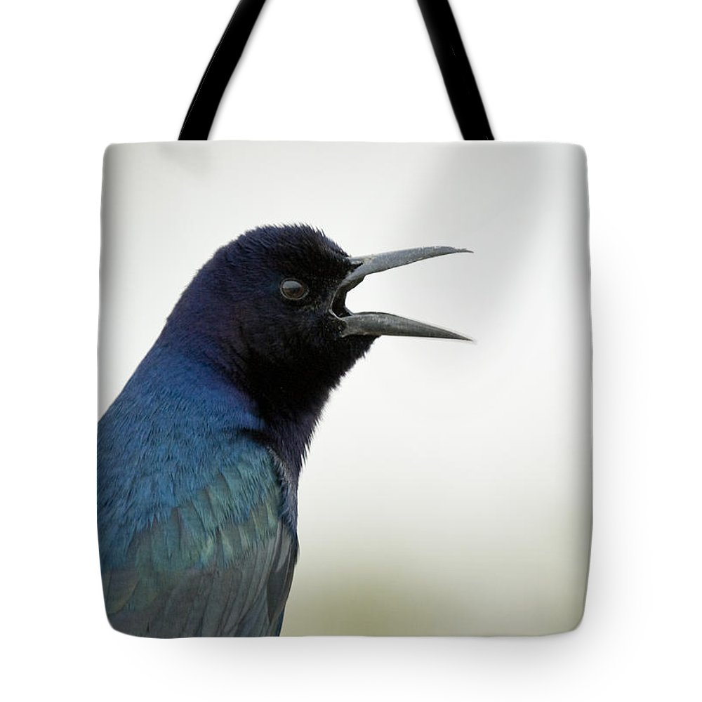 Boat-tailed Tote Bag featuring the photograph Grackle by Sandy Swanson