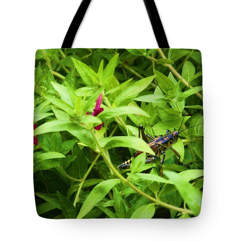 Grasshopper Tote Bag featuring the photograph Grasshopper by Chuck Hicks