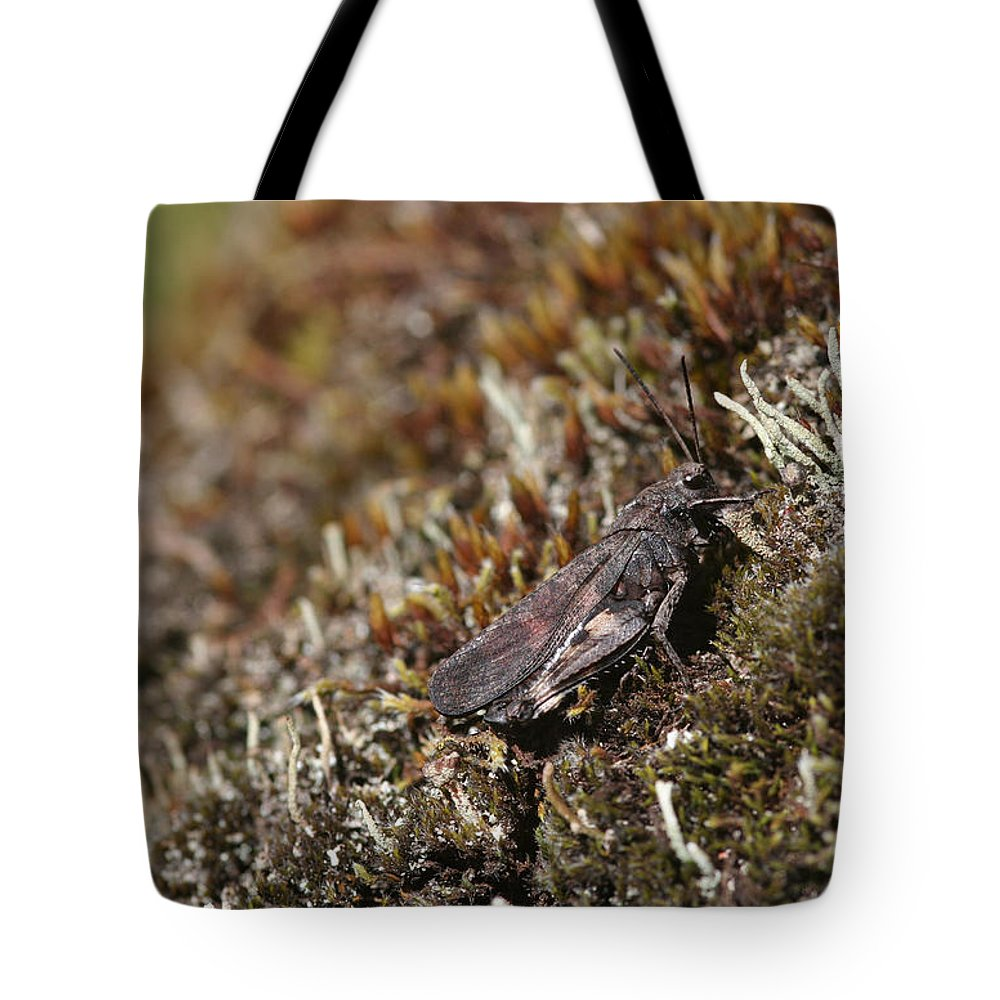 Grasshopper Tote Bag featuring the photograph Grasshopper by Dreamland Media