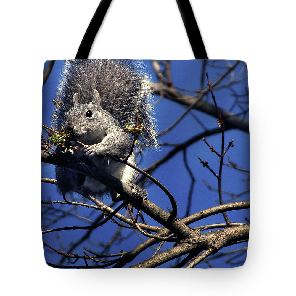Gray Squirrel Tote Bag featuring the photograph Gray Squirrel by Peter Piatt