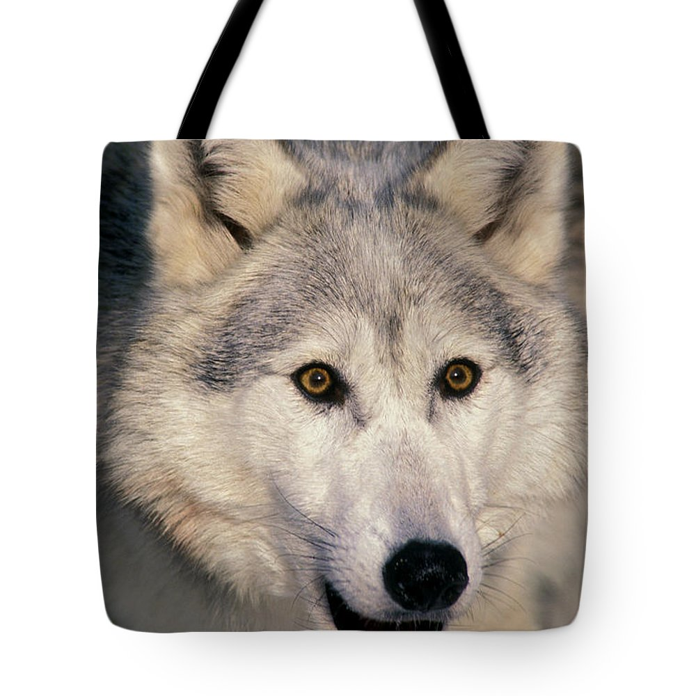 Light Tote Bag featuring the photograph Gray Wolf Canis Lupus, Minnesota by Thomas Kitchin & Victoria Hurst