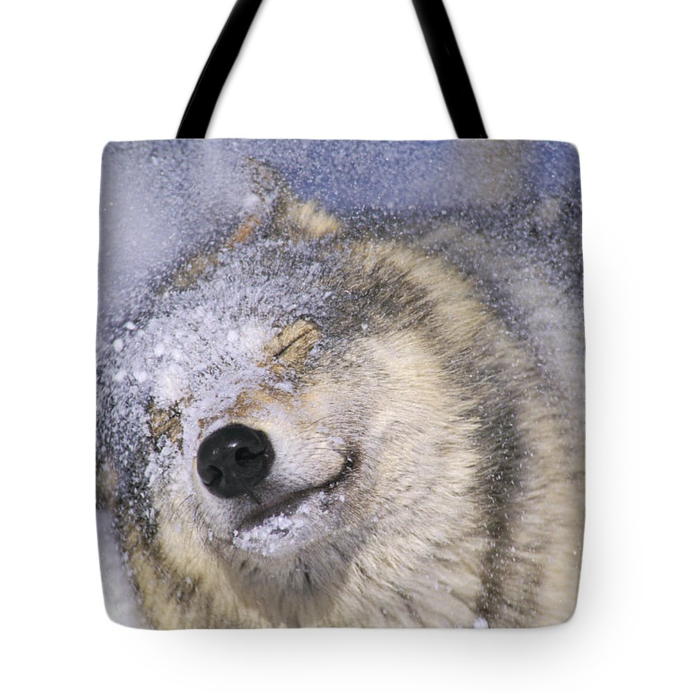 Light Tote Bag featuring the photograph Gray Wolf Canis Lupus Shaking Snow Off by Thomas Kitchin & Victoria Hurst
