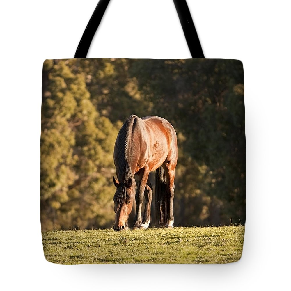 Horse Tote Bag featuring the photograph Grazing Horse At Sunset by Michelle Wrighton
