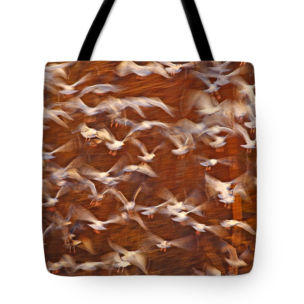 Mp Tote Bag featuring the photograph Great Black-backed Gulls by Scott Leslie
