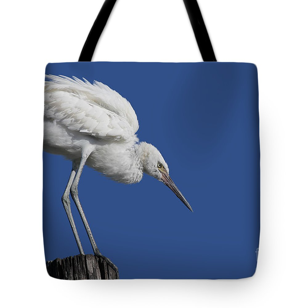 Bird Tote Bag featuring the photograph On Top Of The World... Pole by Meg Rousher
