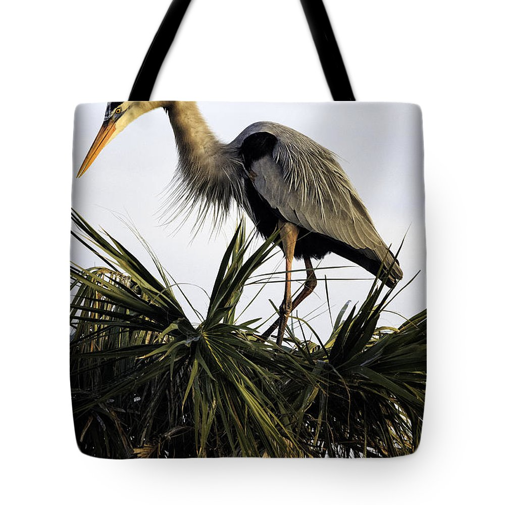 Bird Tote Bag featuring the photograph Great Blue Heron On Palm by Fran Gallogly
