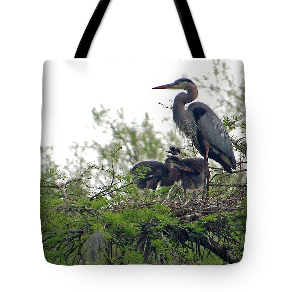 Great Blue Heron Tote Bag featuring the photograph Great Blue Heron With Fledglings by Suzanne Gaff