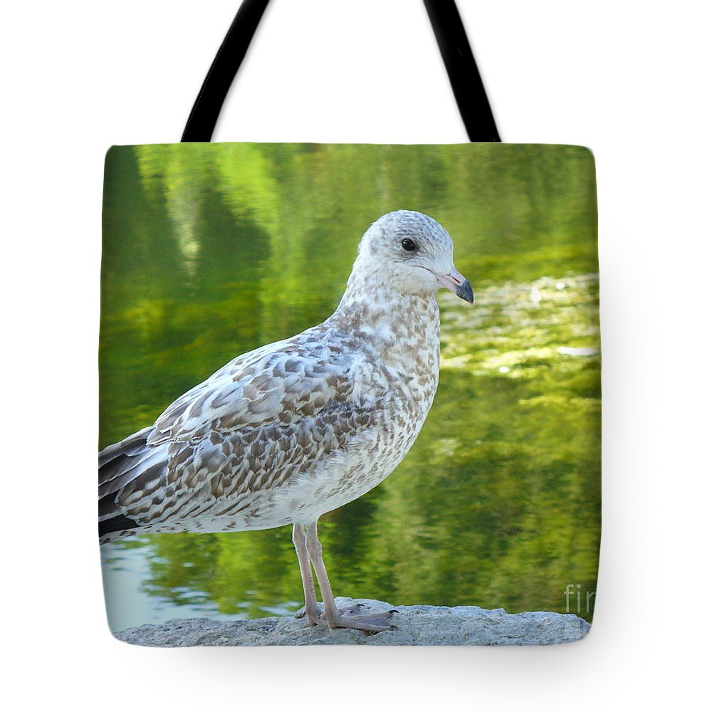 Bird Tote Bag featuring the photograph Great Expectation by Lingfai Leung
