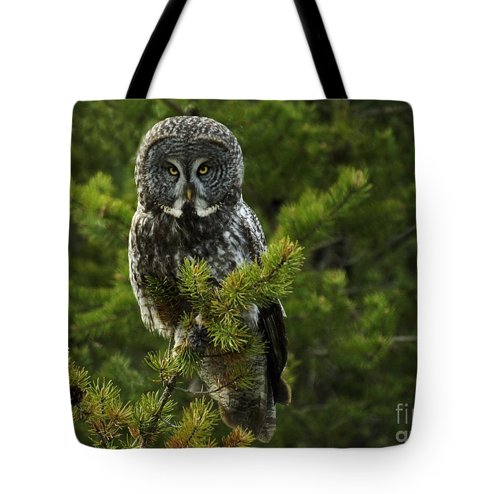 Owl Tote Bag featuring the photograph Great Grey Owl by Bob Christopher