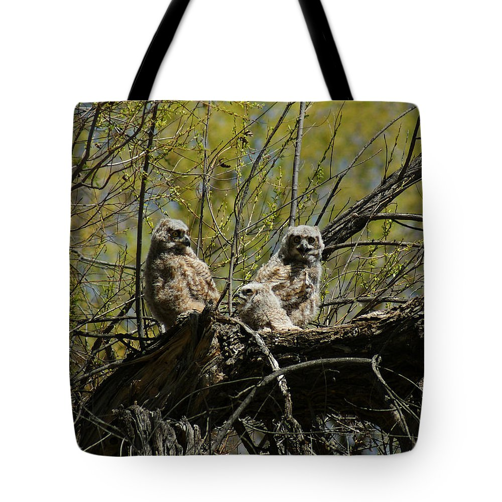 Birds Tote Bag featuring the photograph Great Horned Owlets 1 by Ernie Echols