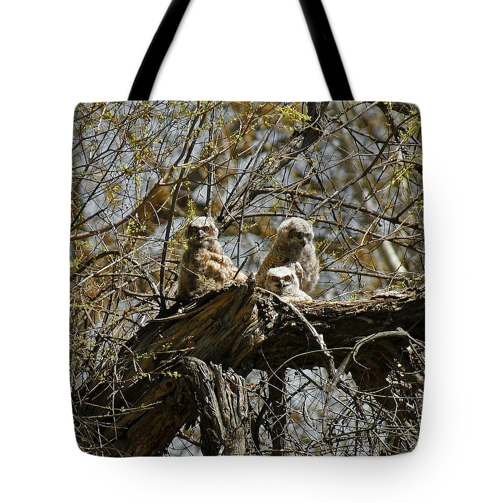 Birds Tote Bag featuring the photograph Great Horned Owlets Photo by Ernie Echols