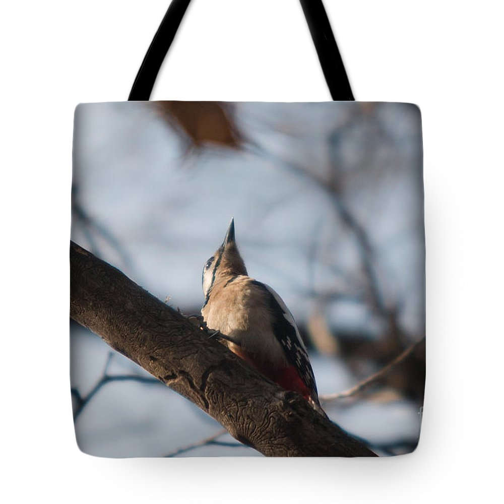 Birds Tote Bag featuring the photograph Great Spotted Woodpecker by Jivko Nakev