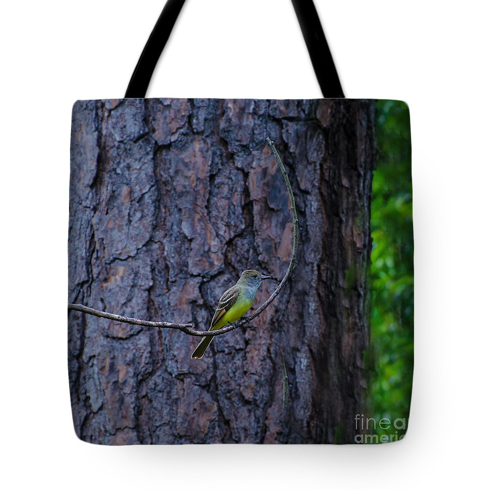 Bird Tote Bag featuring the photograph Greater Crested Flycatcher by Donna Brown