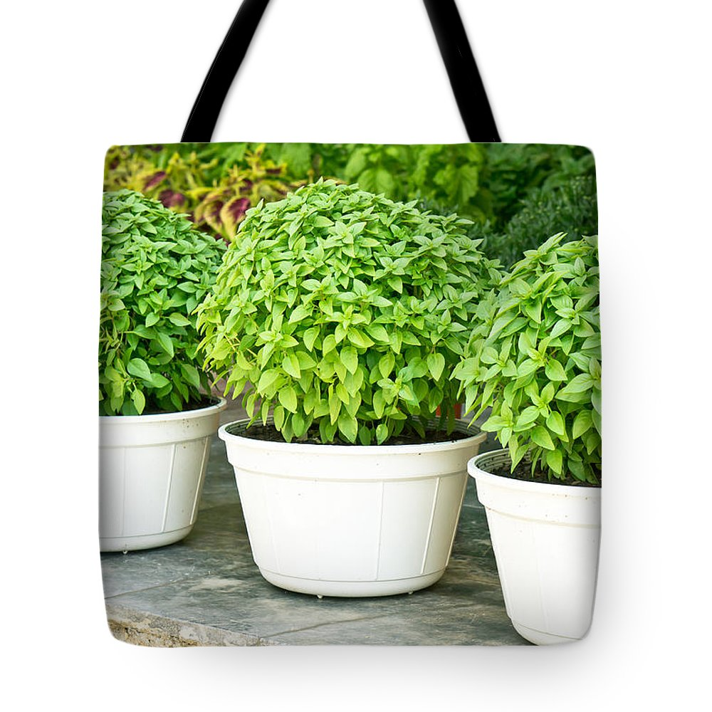 Alive Tote Bag featuring the photograph Greek Basil by Tom Gowanlock