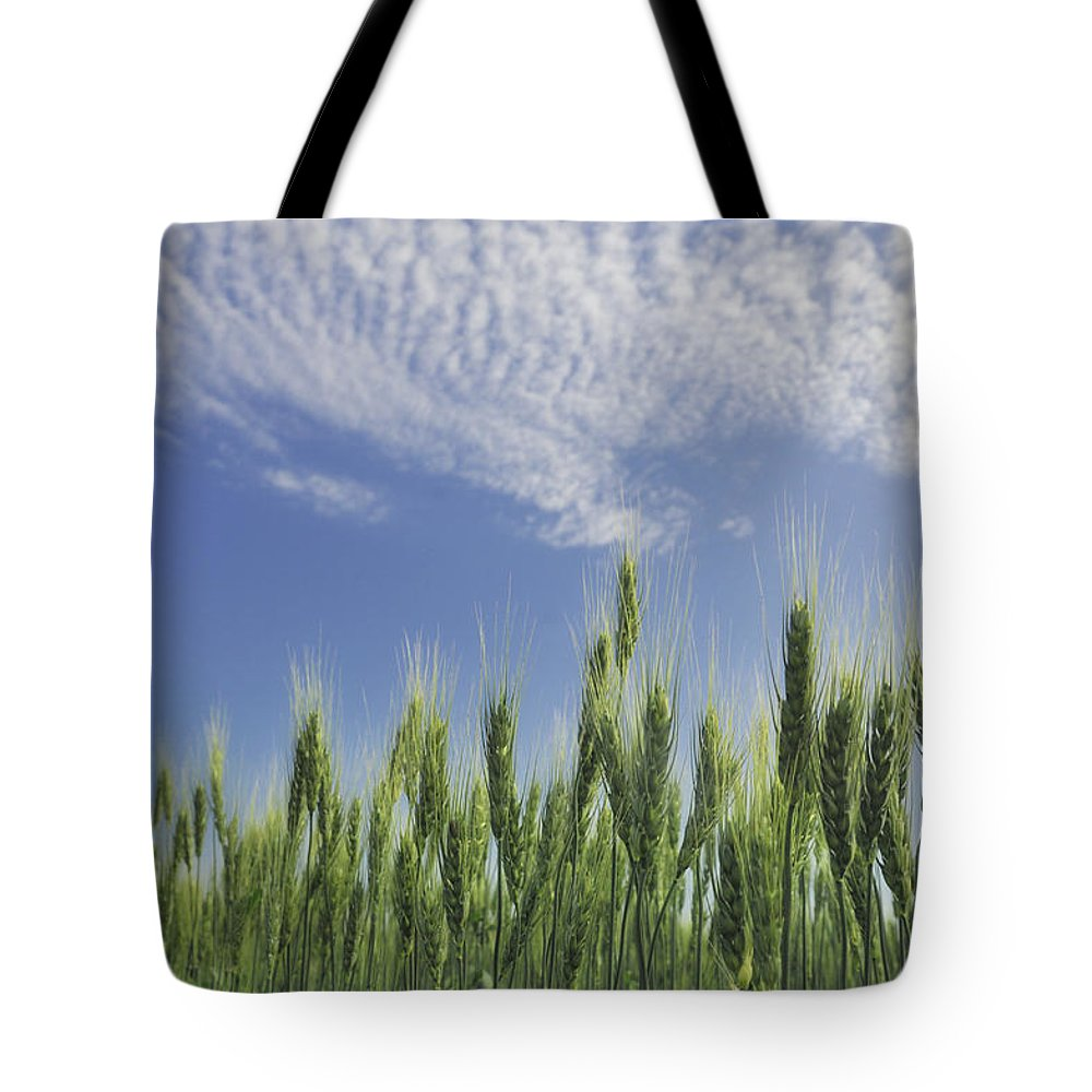 Light Tote Bag featuring the photograph Green Crops Northwest Of Edmonton by Peter Carroll