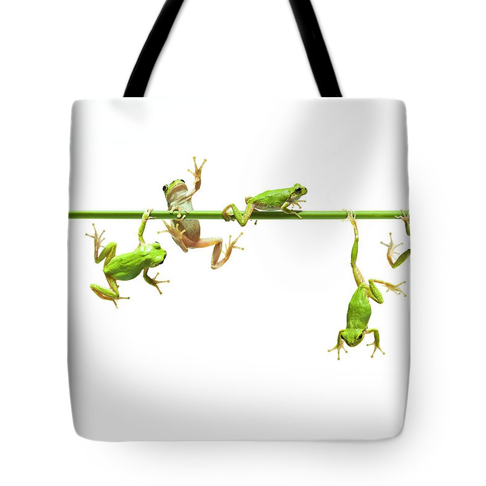 Hanging Tote Bag featuring the photograph Green Flogs Each Other Freely On Stem by Yuji Sakai
