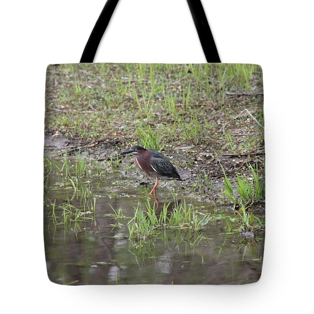 Green Heron Tote Bag featuring the photograph Green Heron Along Shore by Wayne Williams