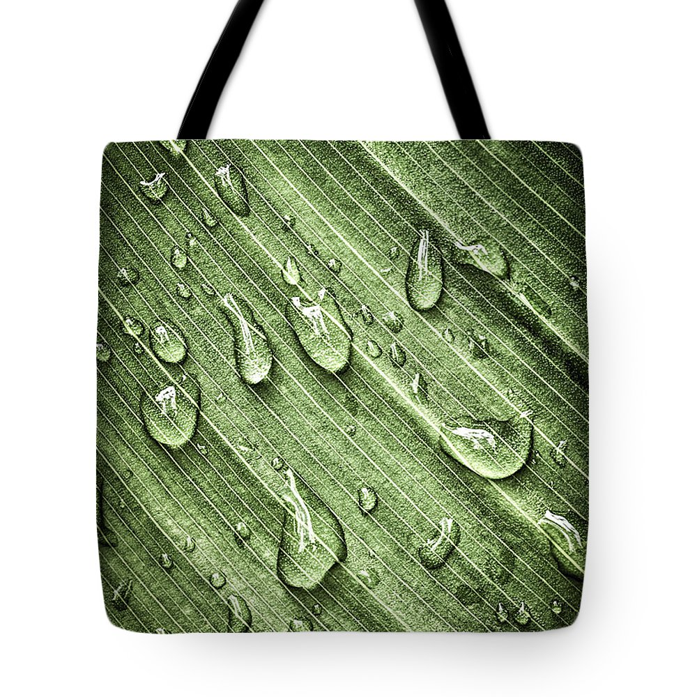 Plant Tote Bag featuring the photograph Green Leaf Background With Raindrops by Elena Elisseeva