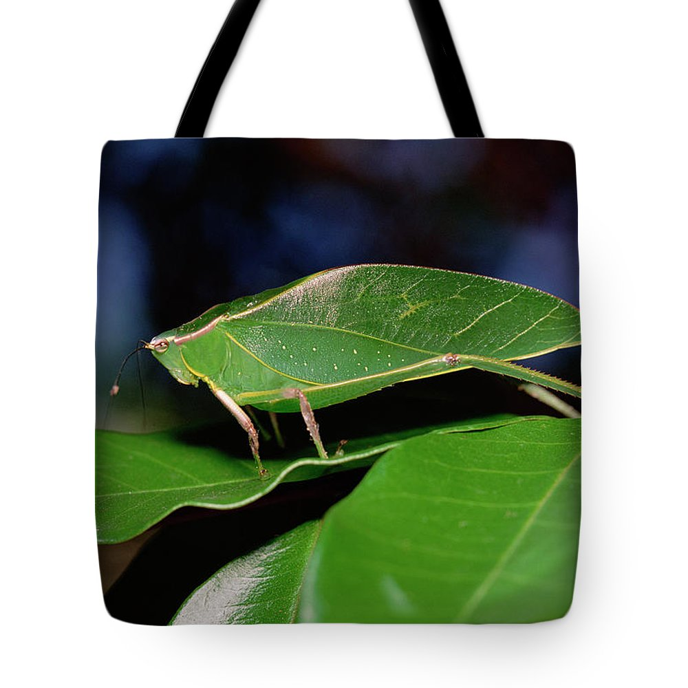 Camouflage Tote Bag featuring the photograph Green Leaf-mimic Katydid Steirodon by Gerry Ellis