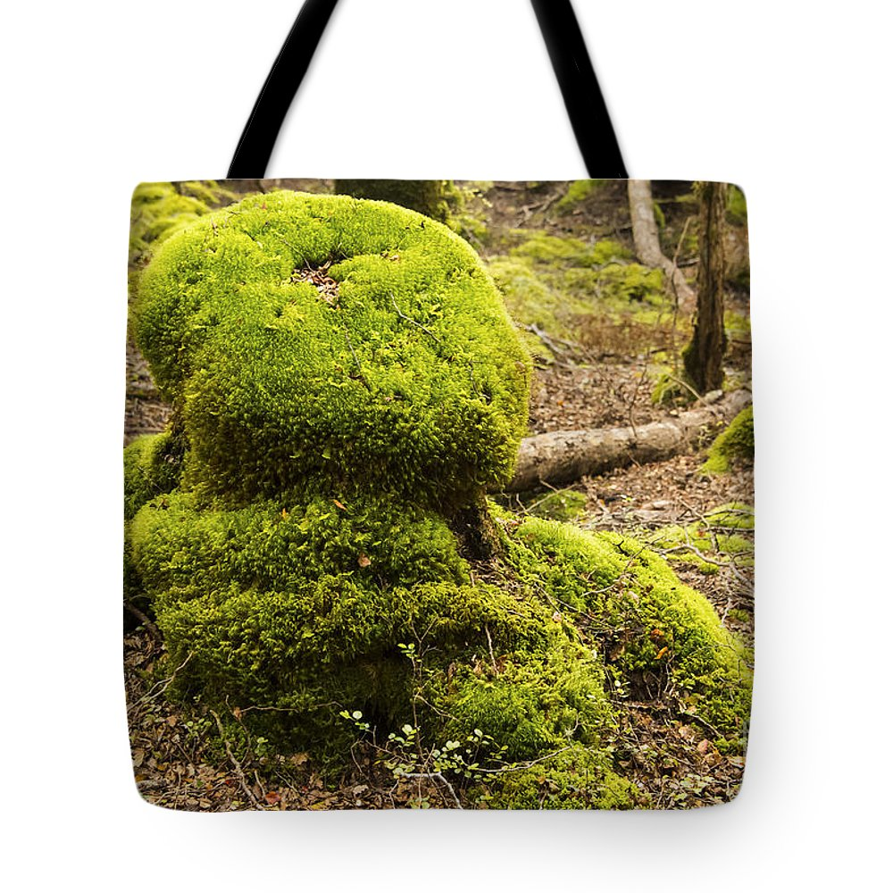 Lake Te Anau New Zealand Tree Stump Moss Trees Foliage Rainforest Rainforests Landscape Landscapes Tote Bag featuring the photograph Green Octopus by Bob Phillips