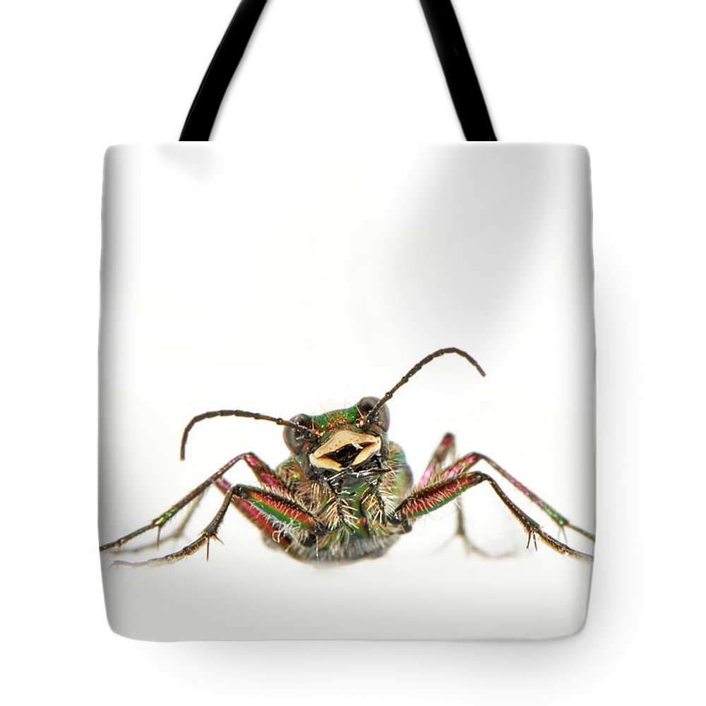 White Background Tote Bag featuring the photograph Green Tiger Beetle by Robert Trevis-smith