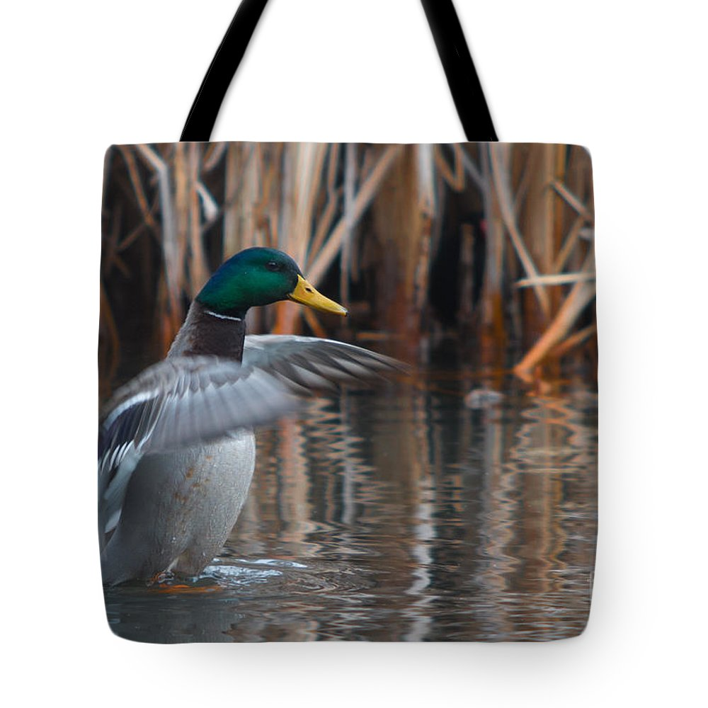 Aves Tote Bag featuring the photograph Greetings by Jivko Nakev