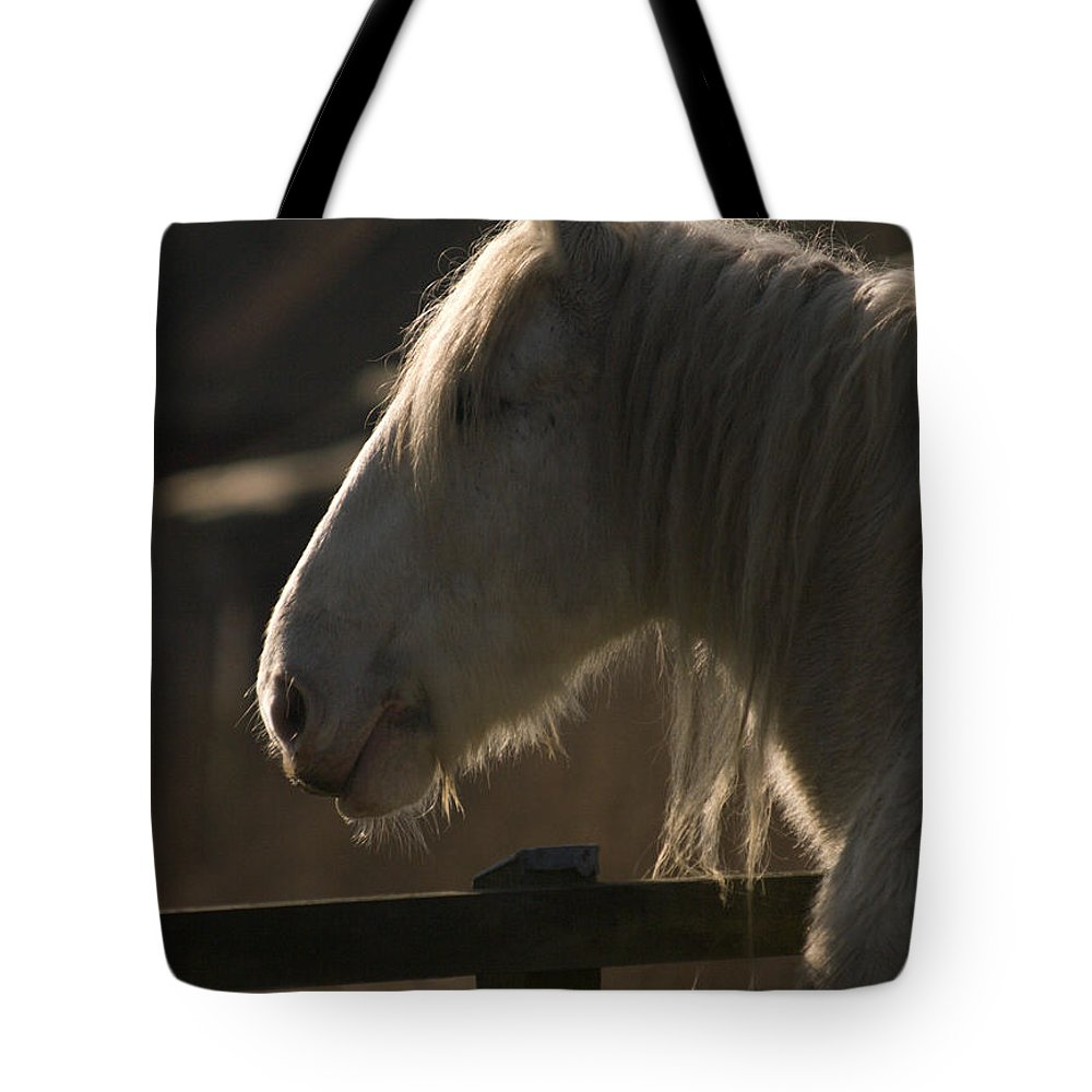 Horse Tote Bag featuring the photograph Grey Shire Horse by Angel Ciesniarska