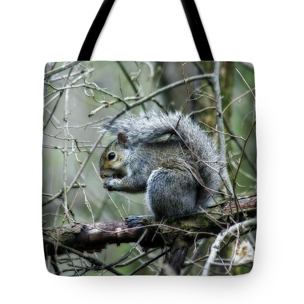 Squirrel Tote Bag featuring the photograph Grey Squirrel by CE Haynes
