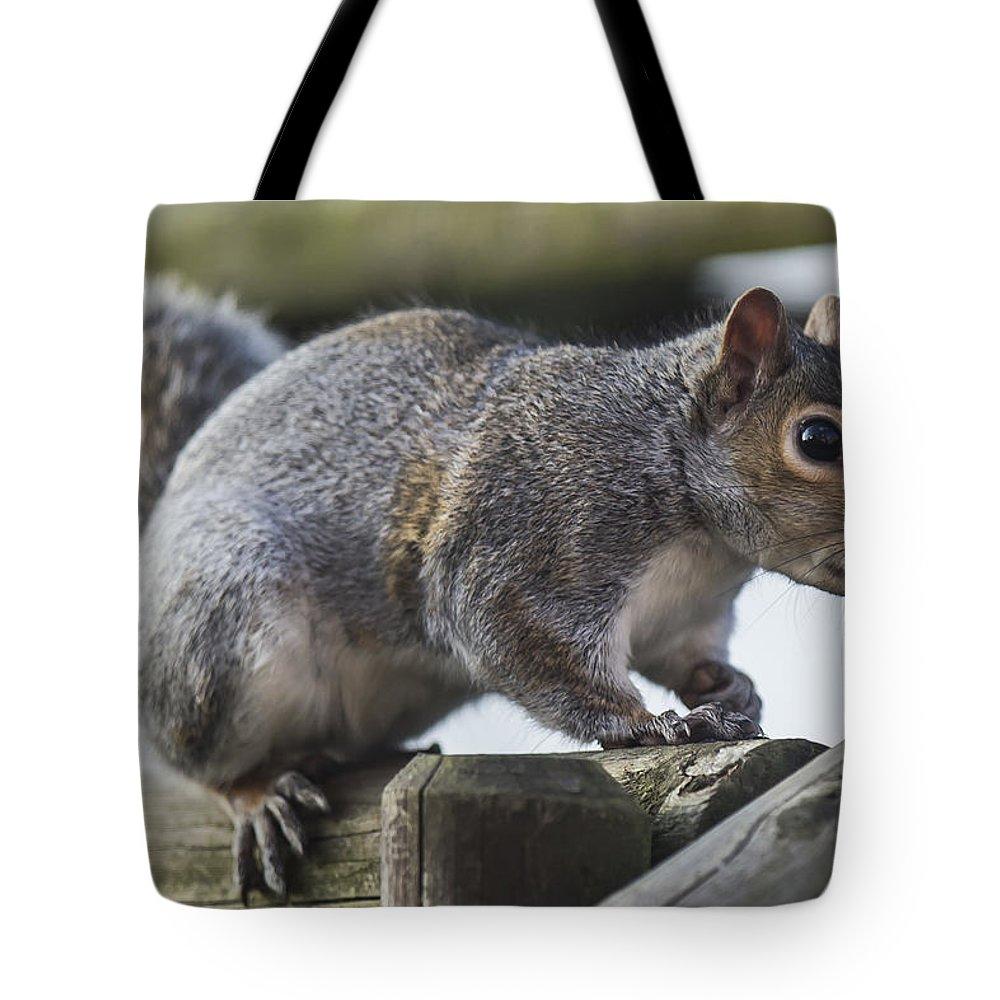 Wildlife Animals Squirrel Grey British Tote Bag featuring the photograph Grey Squirrel by John Richardson