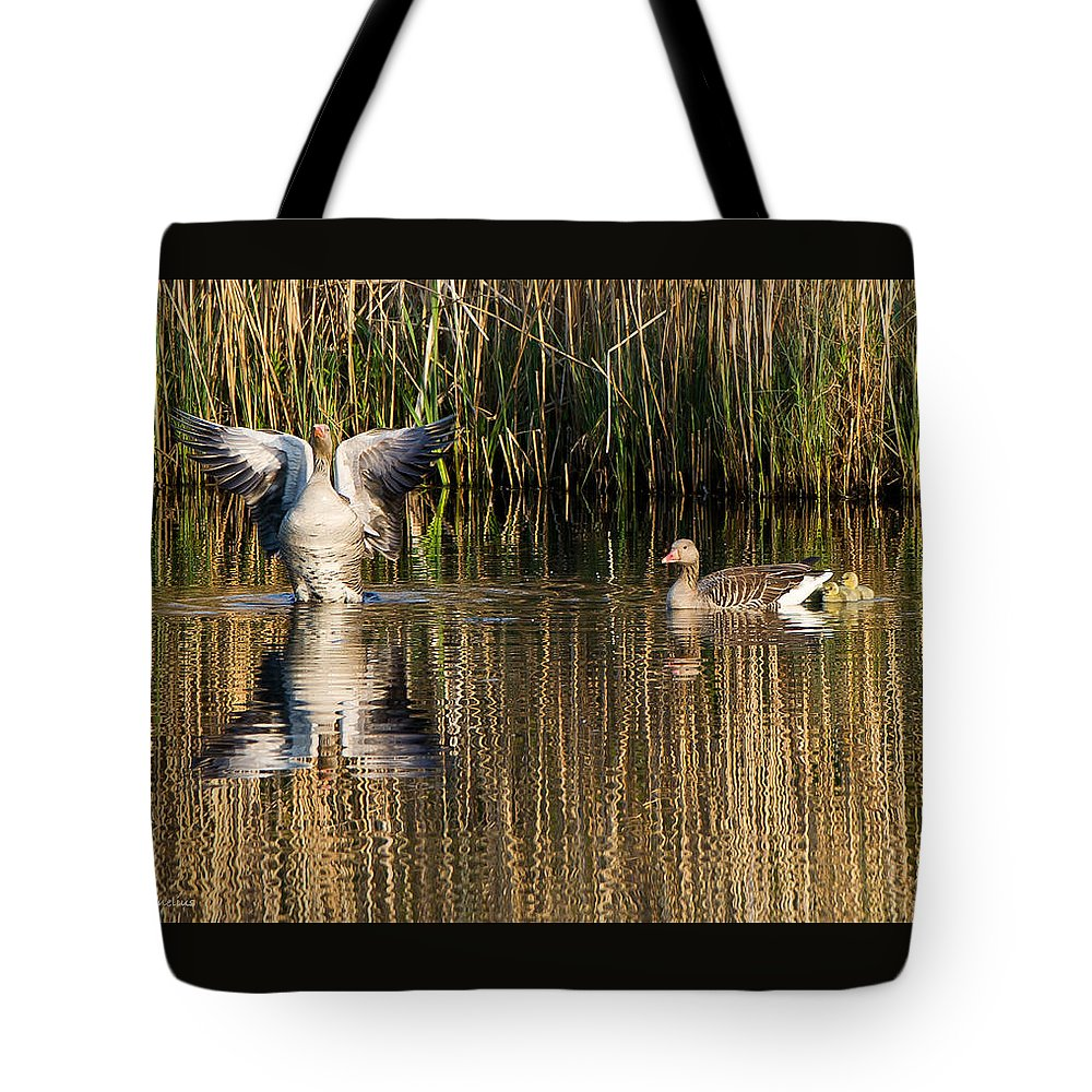 Greylag Goose Family Tote Bag featuring the photograph Greylag Goose Family by Torbjorn Swenelius