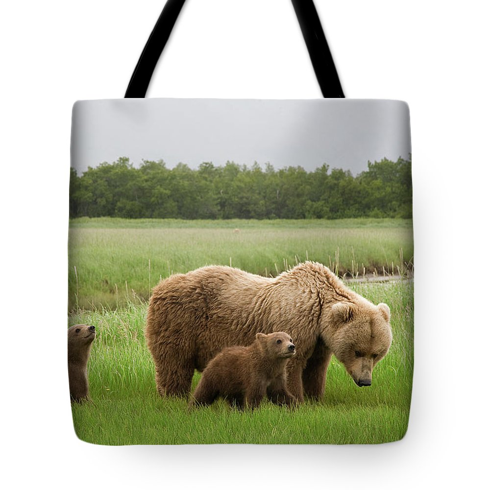Mp Tote Bag featuring the photograph Grizzly Bear With Spring Cubs by Matthias Breiter