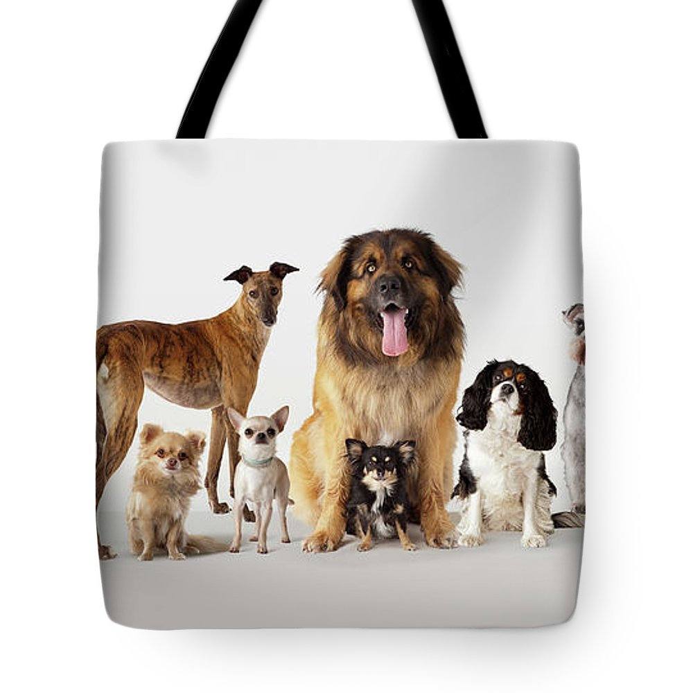 Pets Tote Bag featuring the photograph Group Portrait Of Dogs by Compassionate Eye Foundation/david Leahy