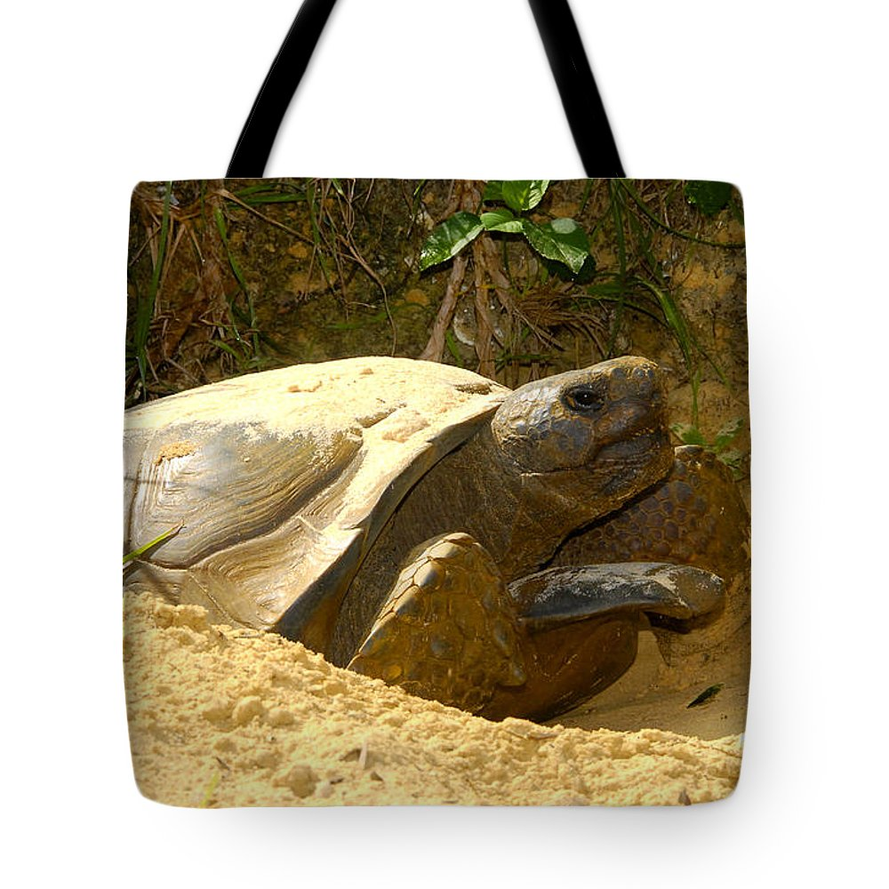 Florida Gopher Tortoise Tote Bag featuring the photograph Florida Gopher Tortoise And Home by David Lee Thompson