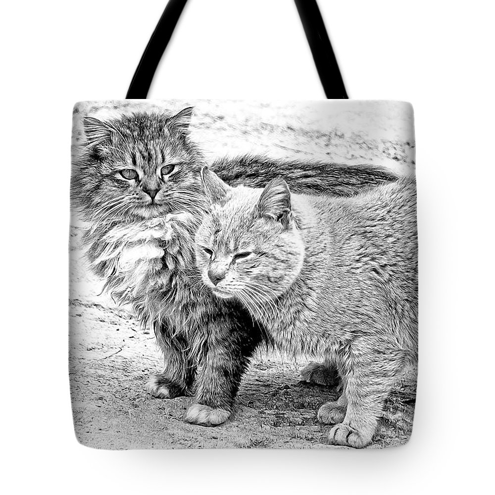 Cats Tote Bag featuring the photograph Gutter Kitties Four by Alice Gipson