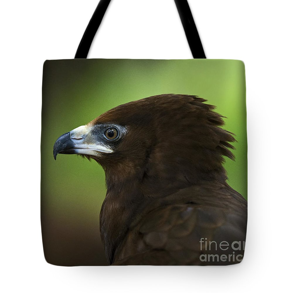 Festblues Tote Bag featuring the photograph Gymnogene... by Nina Stavlund