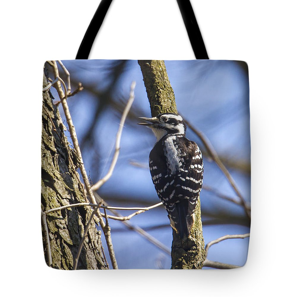 Animal Tote Bag featuring the photograph Hairy Woodpecker - Female by Jack R Perry