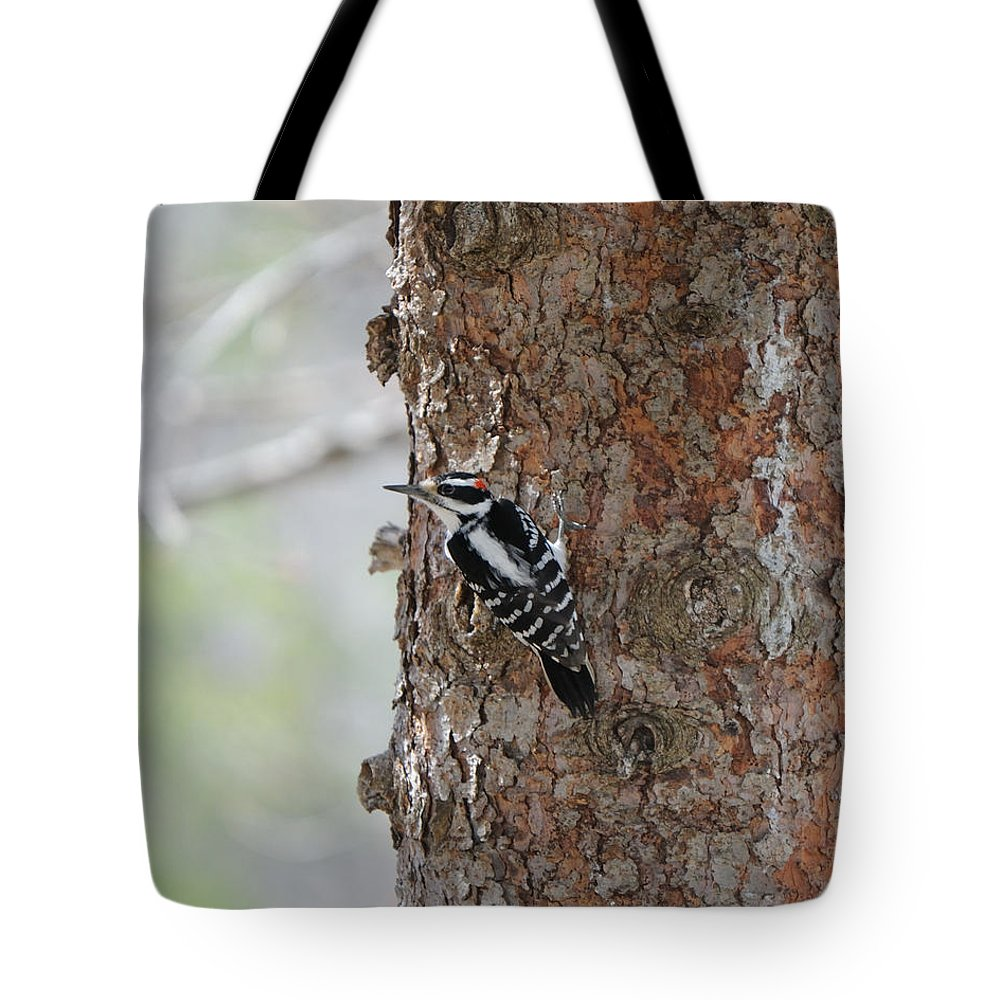 Bird Tote Bag featuring the photograph Hairy Woodpecker by Scott Angus