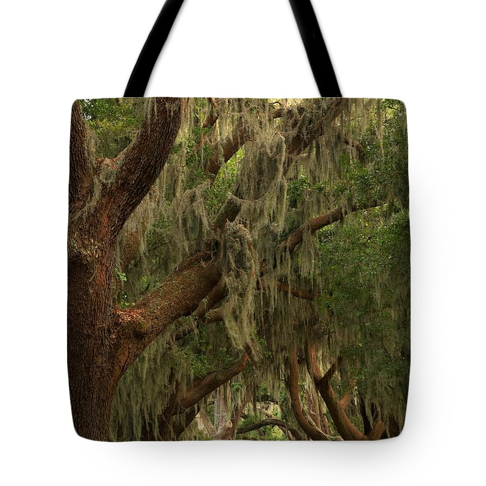 Avenue Of The Oaks Tote Bag featuring the photograph Hallway Of Oaks by Adam Jewell