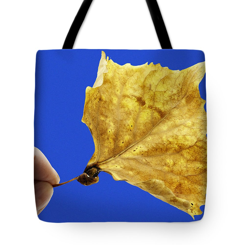 Leaf Tote Bag featuring the photograph Hand Holding Dry Cottonwood Leaf by Donald Erickson