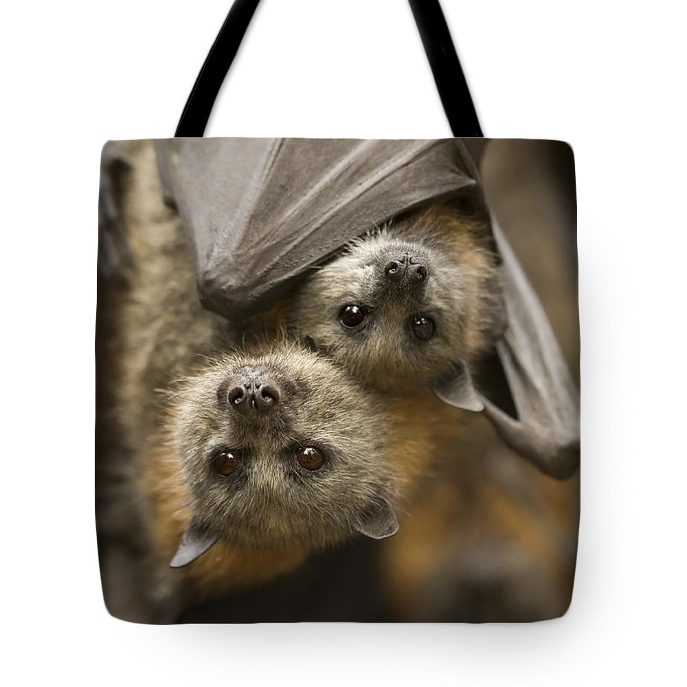 Bats Tote Bag featuring the photograph Hang In There by Mike Dawson