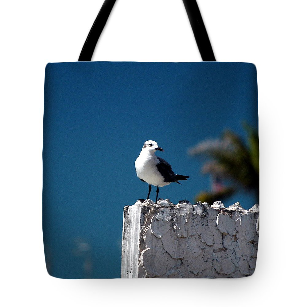 Key West Tote Bag featuring the photograph Hanging Out In Key West 2 by Peter Scolney