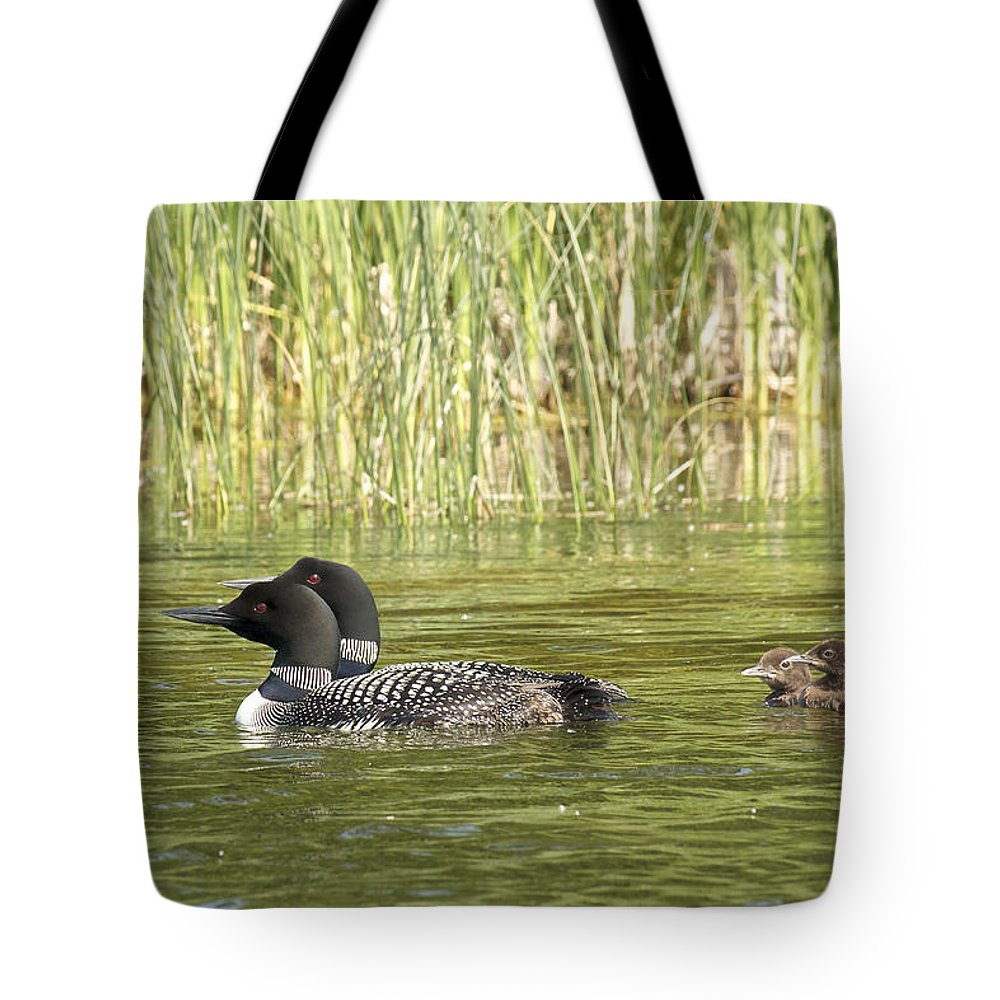 Loons Tote Bag featuring the photograph Happy Family by Penny Meyers
