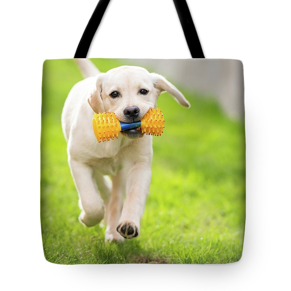 Pets Tote Bag featuring the photograph Happy Hour by Stefan Cioata