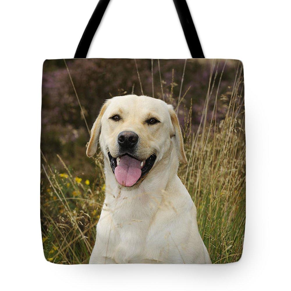 Labrador Retriever Tote Bag featuring the photograph Happy Labrador by John Daniels