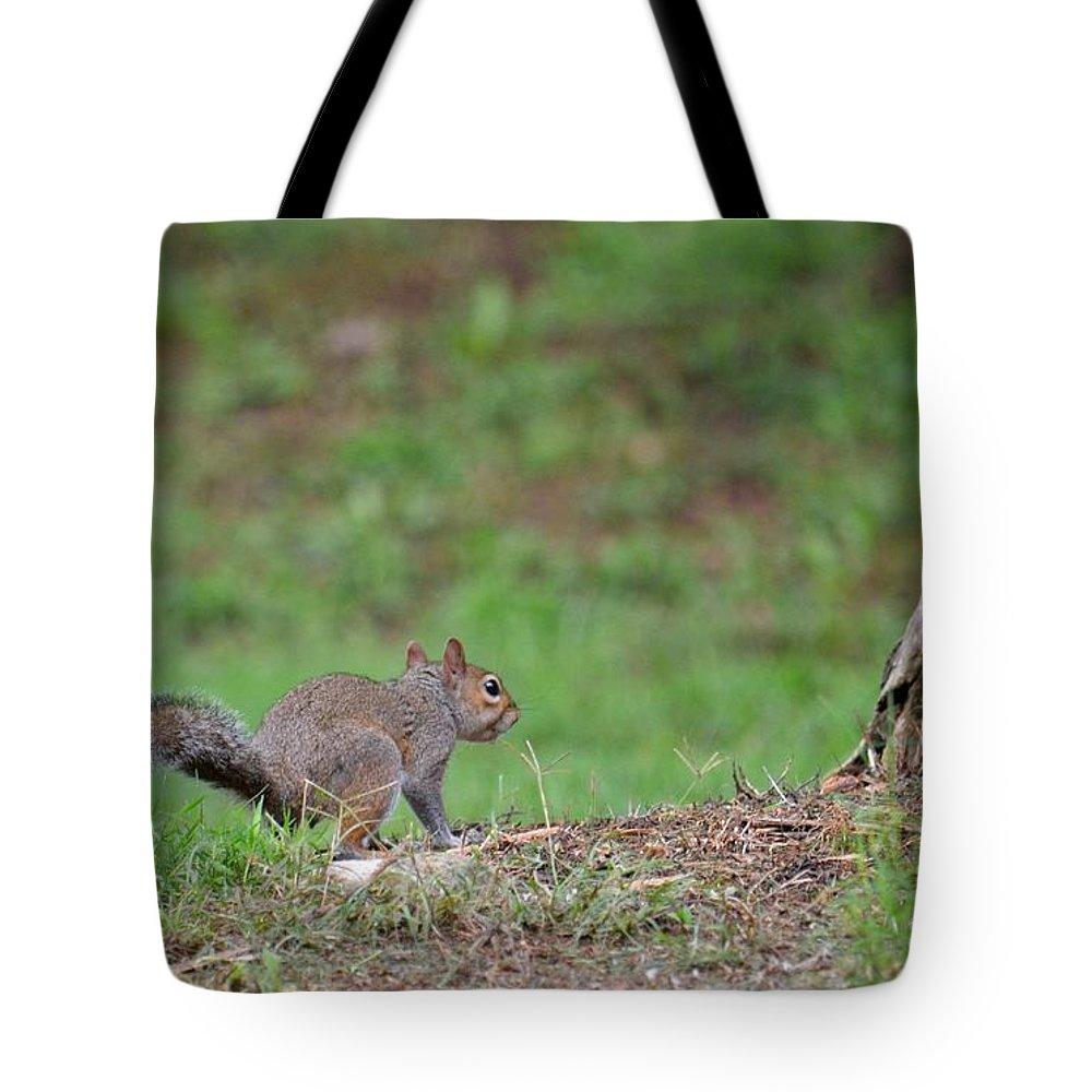 Happy Squirrel Tote Bag featuring the photograph Happy Squirrel by Maria Urso