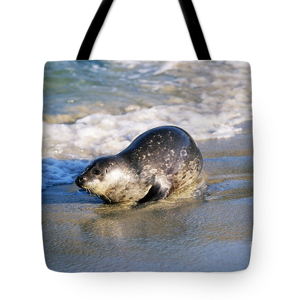 Fauna Tote Bag featuring the photograph Harbor Seal by David Davis