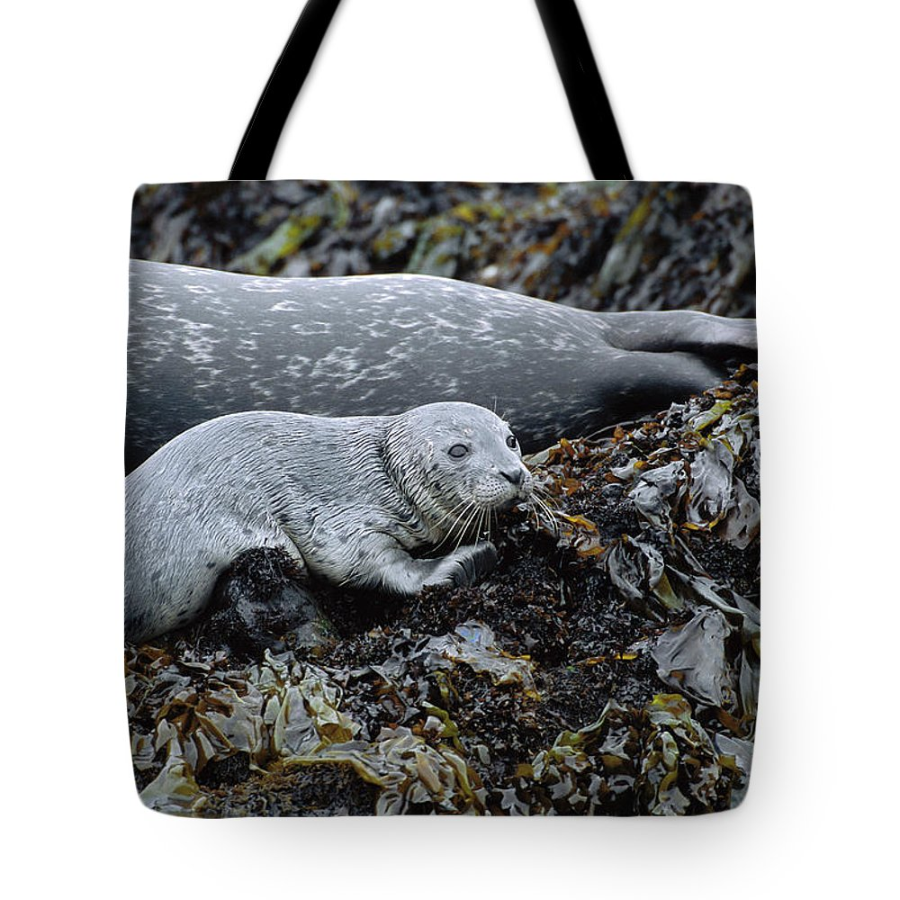Color Image Tote Bag featuring the photograph Harbor Seal Pup Resting by Suzi Eszterhas