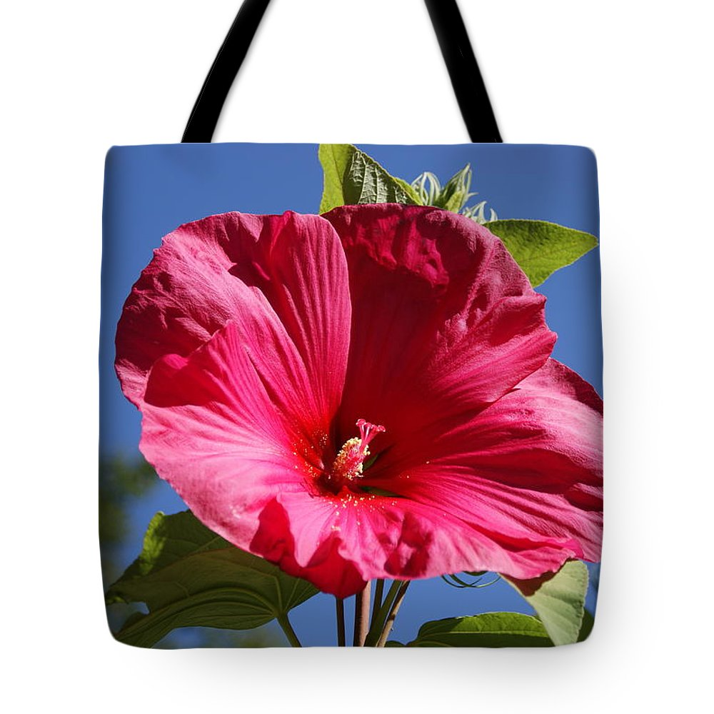 Hardy Hibiscus Tote Bag For Sale By Holly Eads